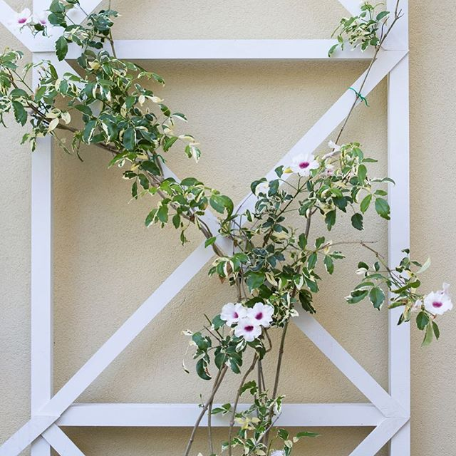 Want to learn how to build a criss cross garden wall trellis? I built one with a handy brad nailer by @arrowfastener - learn how you can too on the blog!