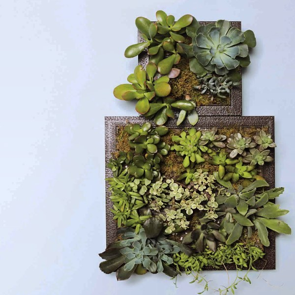 This succulent garden! Link in bio! (Don't forget to enter at www.arrowfastener.com/10-weeks-of-awesome for the chance to win the tool used in this project!)