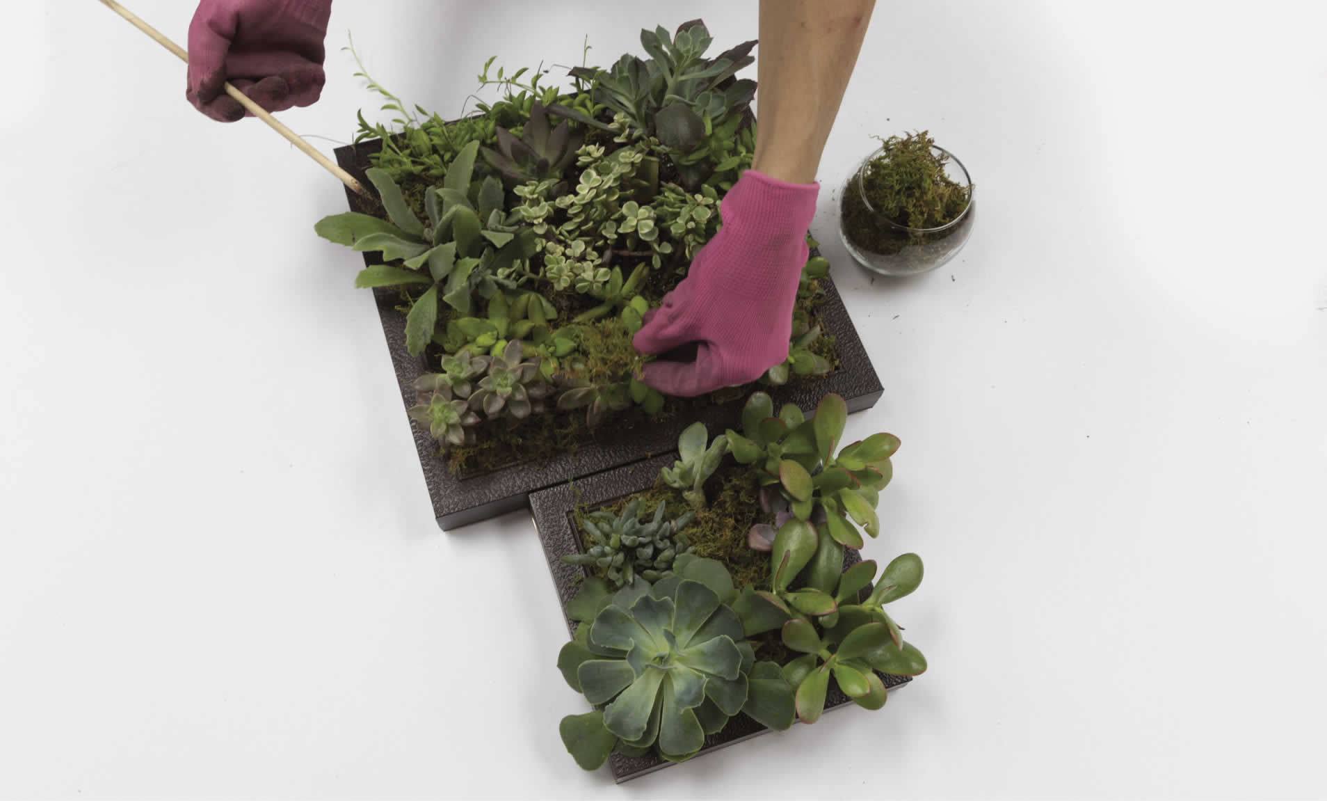 vert-succulent-garden-arrow-project-step13a.jpg
