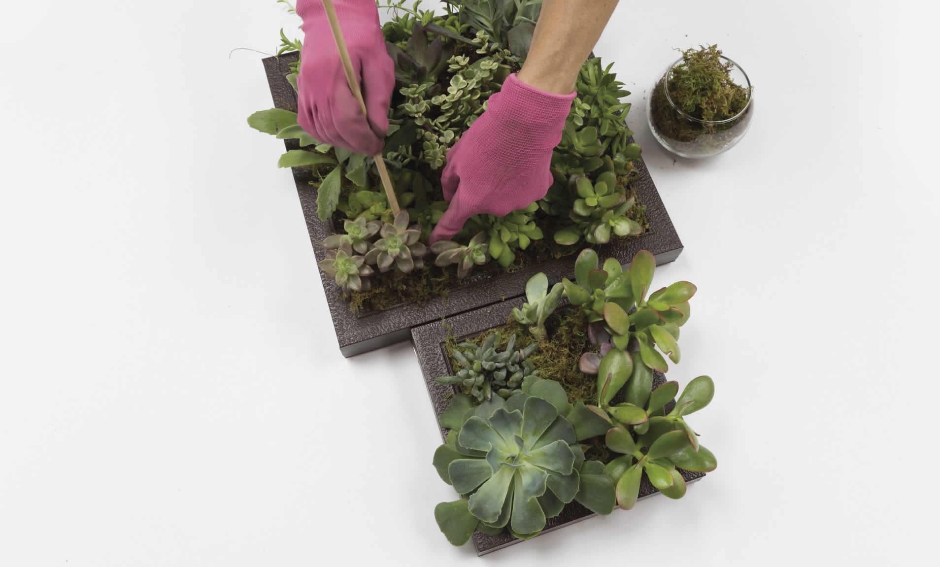 vert-succulent-garden-arrow-project-step13b.jpg